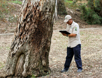 Image result for arborist reports